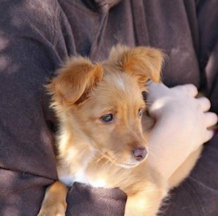 צער בעלים חיים - אינספיריישן גרופ